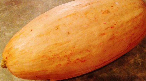 Candy Roaster Pumpkin Squash